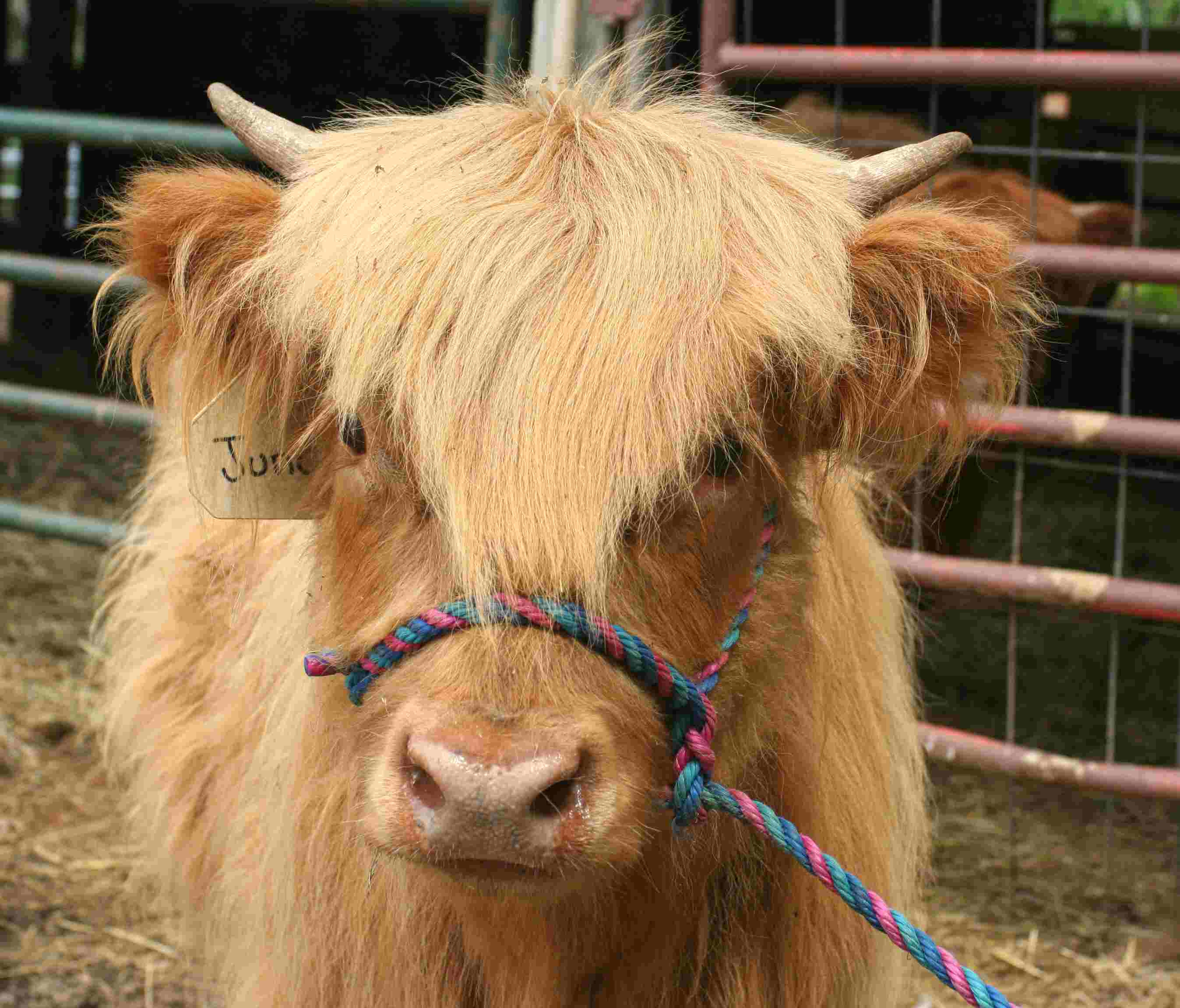 A Calf Is Born - June, 2020