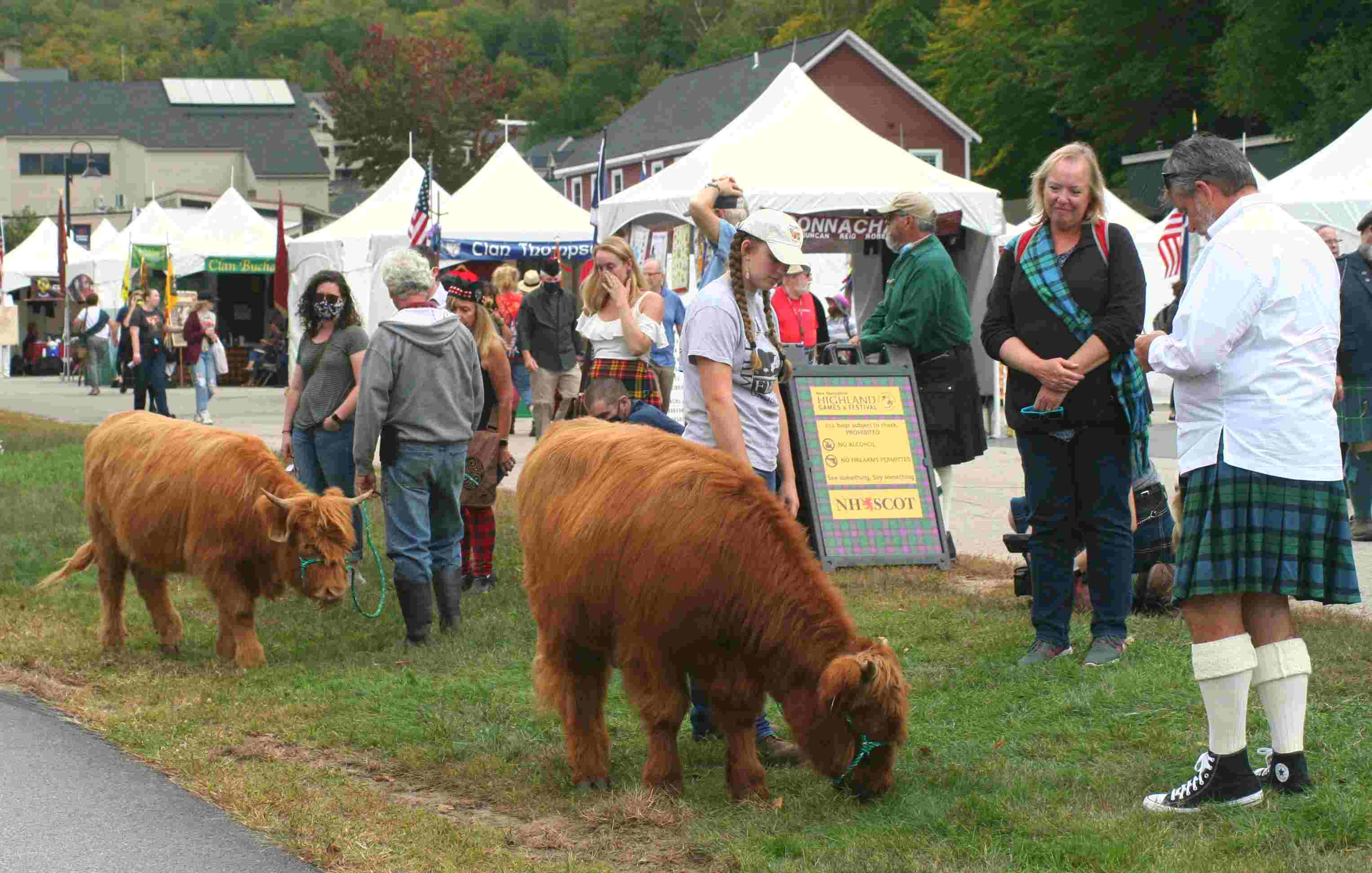 Scottish Cattle at the Highland Games
