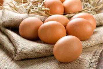 Olivia's Eggs