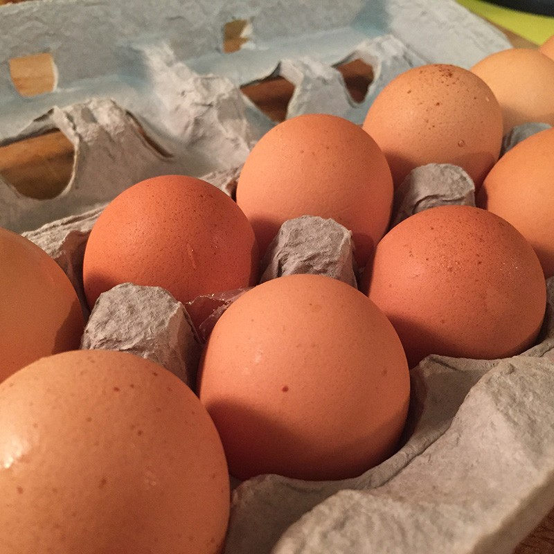 Chicken Eggs, Regular