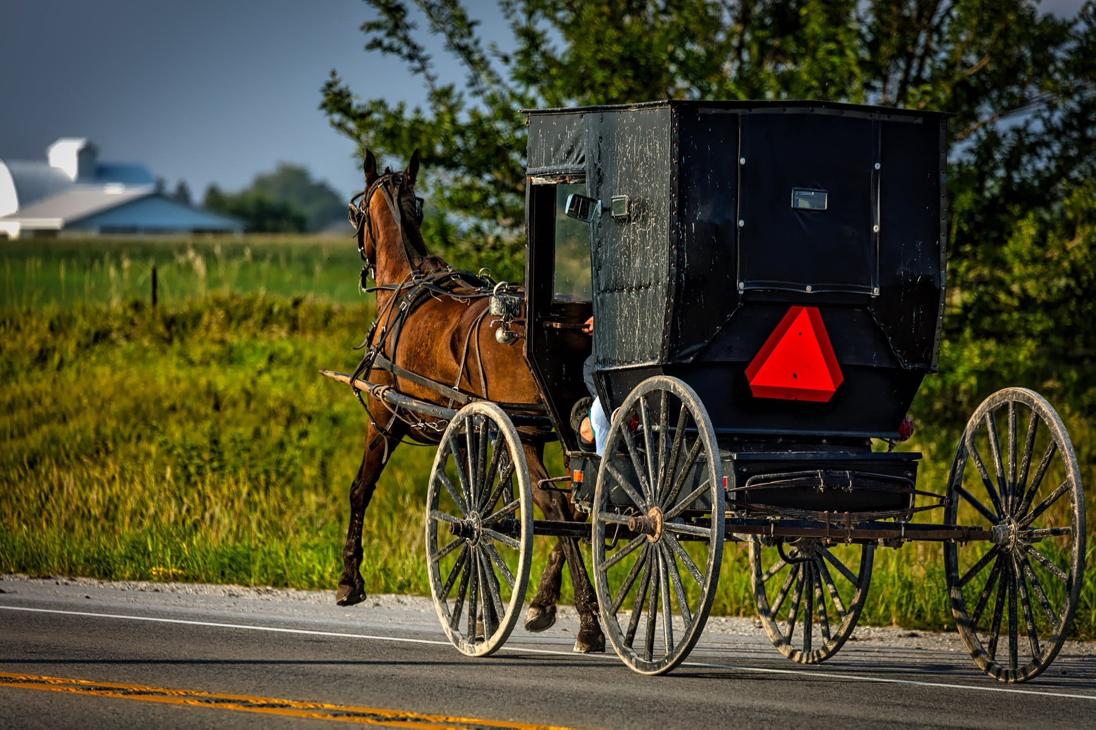 Getting food from the Amish is better, right?