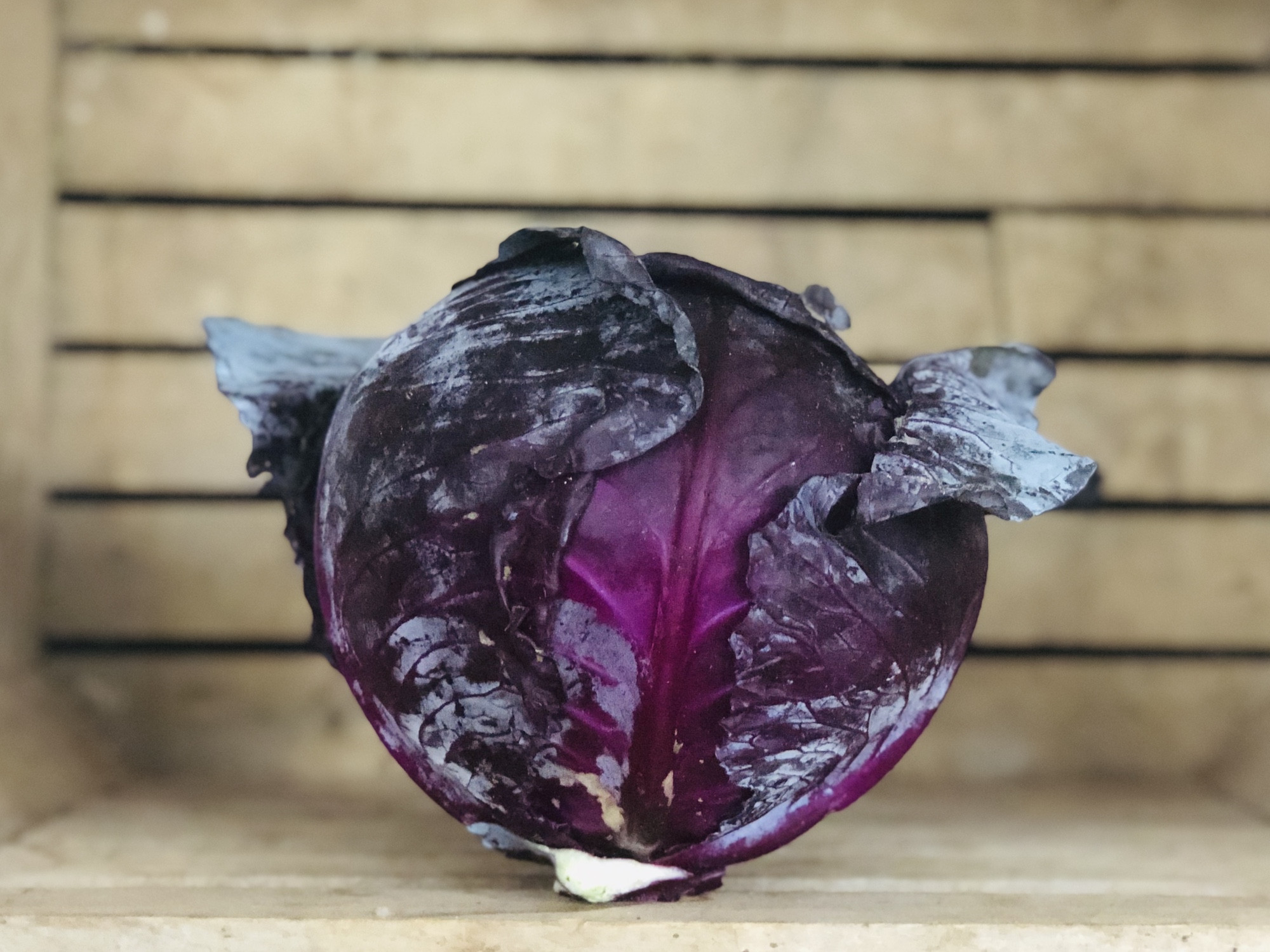 Red Cabbage, 1 head