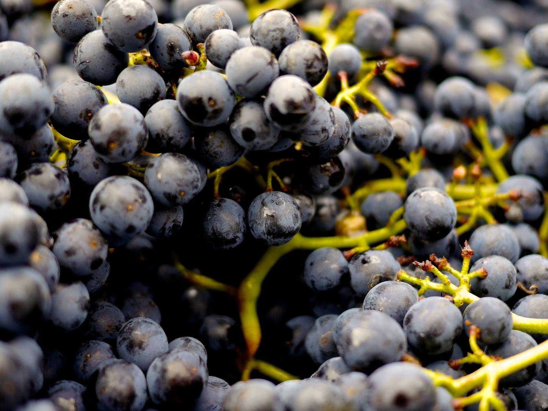Museadine Black Grapes, 1lb