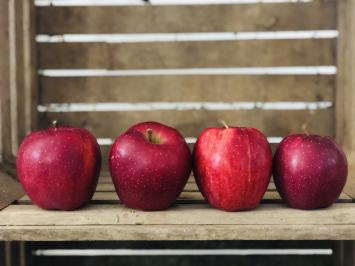 Large IPM Apple