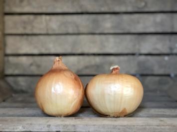 1lb - Yellow Onions