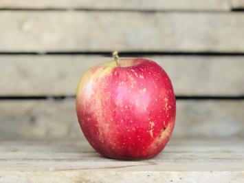 1lb - Honeycrisp Apples