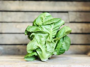 1 small head - Little Gem Romaine Lettuce