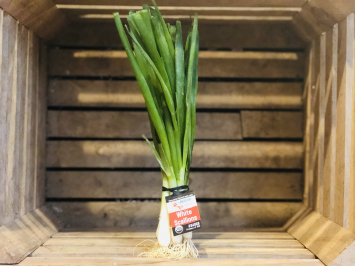 1 bunch - White Scallions