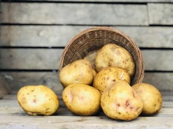 10lb - Yukon Gold Potatoes