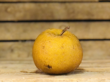Asian Pear, 1lb