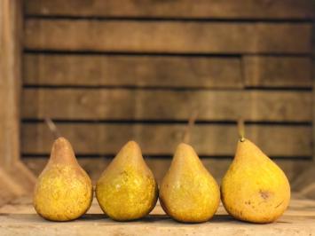 1lb - Bosc Pears