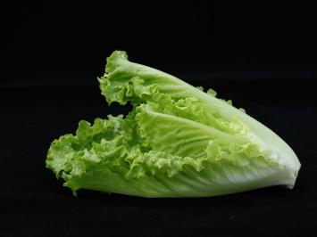 Green Romaine Lettuce 1 Head