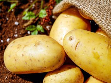 1lb - German Butter Ball Potatoes