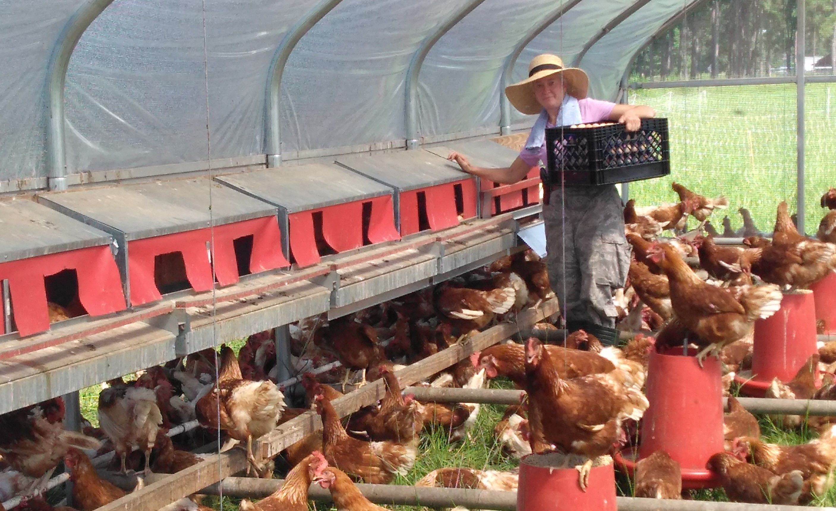 "Video ""How We Move Our Hens on Pasture"" & Egg Sale"