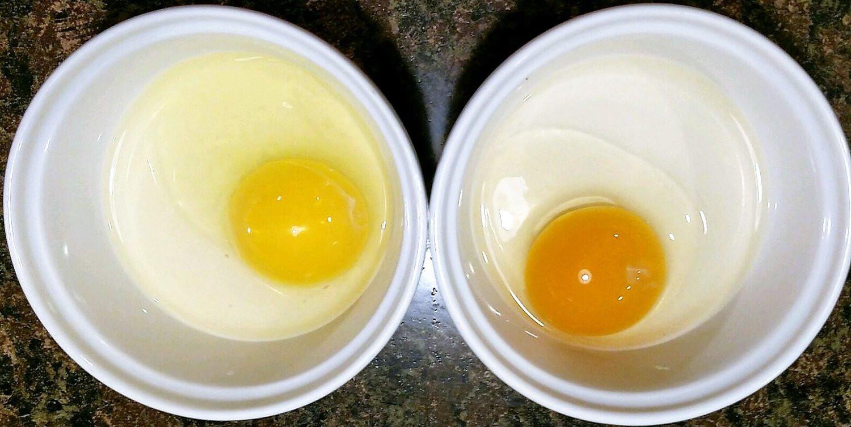 egg-yolks.jpg