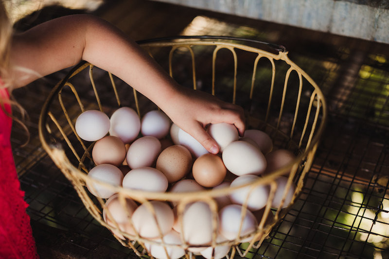8 Things You Need To Know Before Eating Farm Fresh Eggs