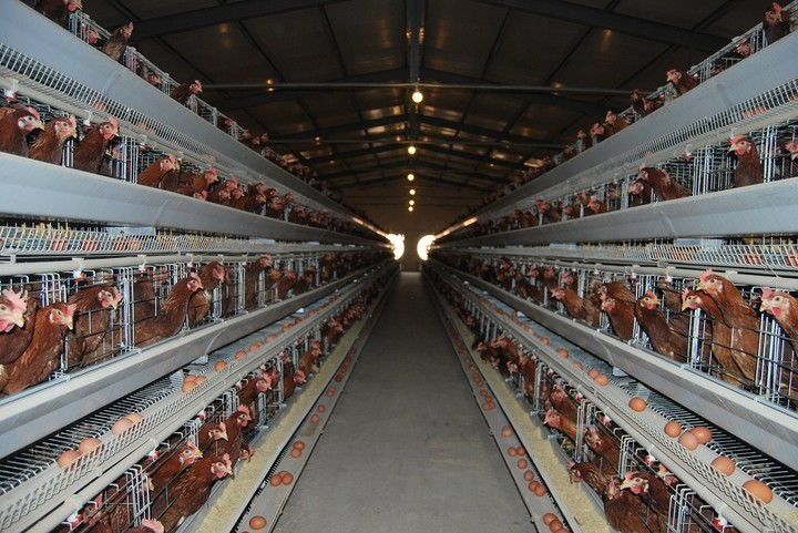 factory-farm.jpg