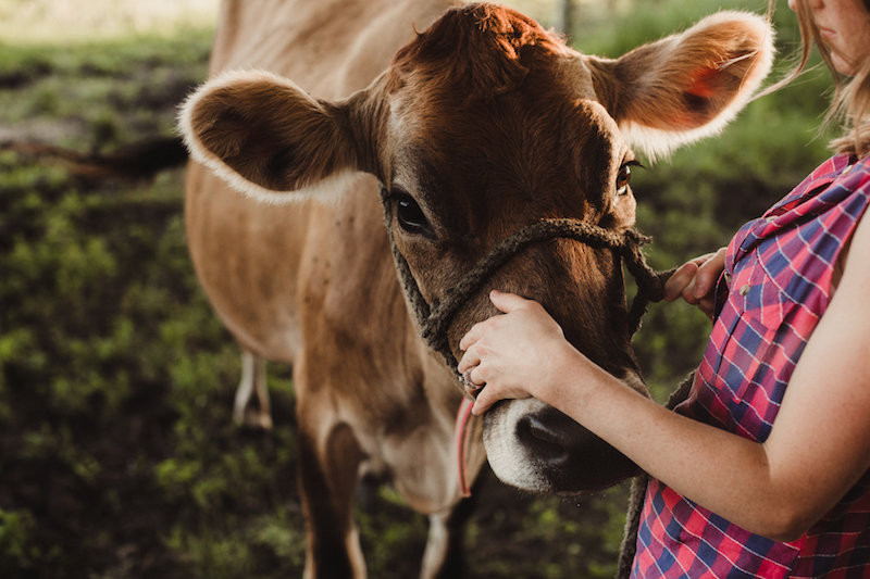 Raw Milk 101