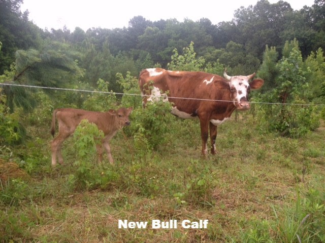 Farm Newsletter 06.27.16