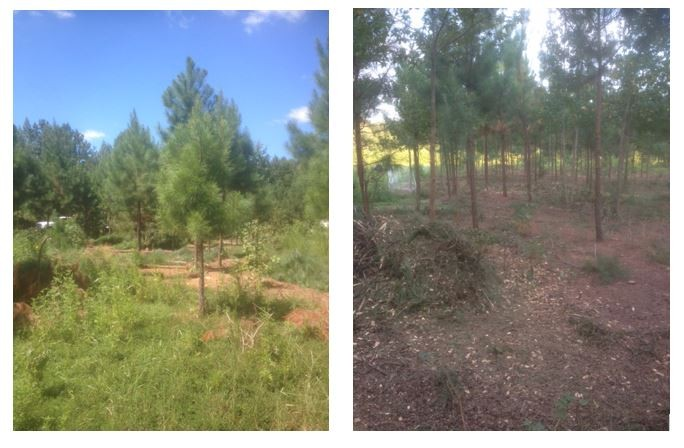 Sep-Timber Farm Updates