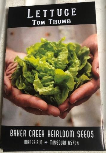 Lettuce- Tom Thumb Seeds