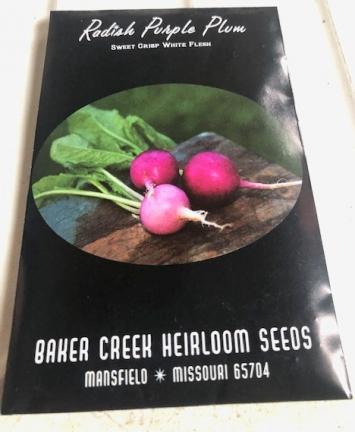Radish - Purple Plum Seeds