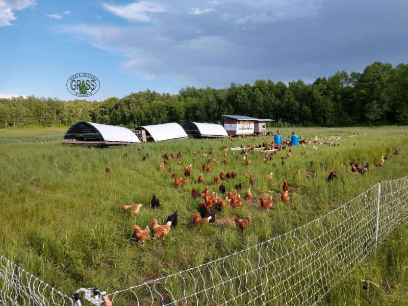 What Does Pasture Raised Mean On Our Farm?