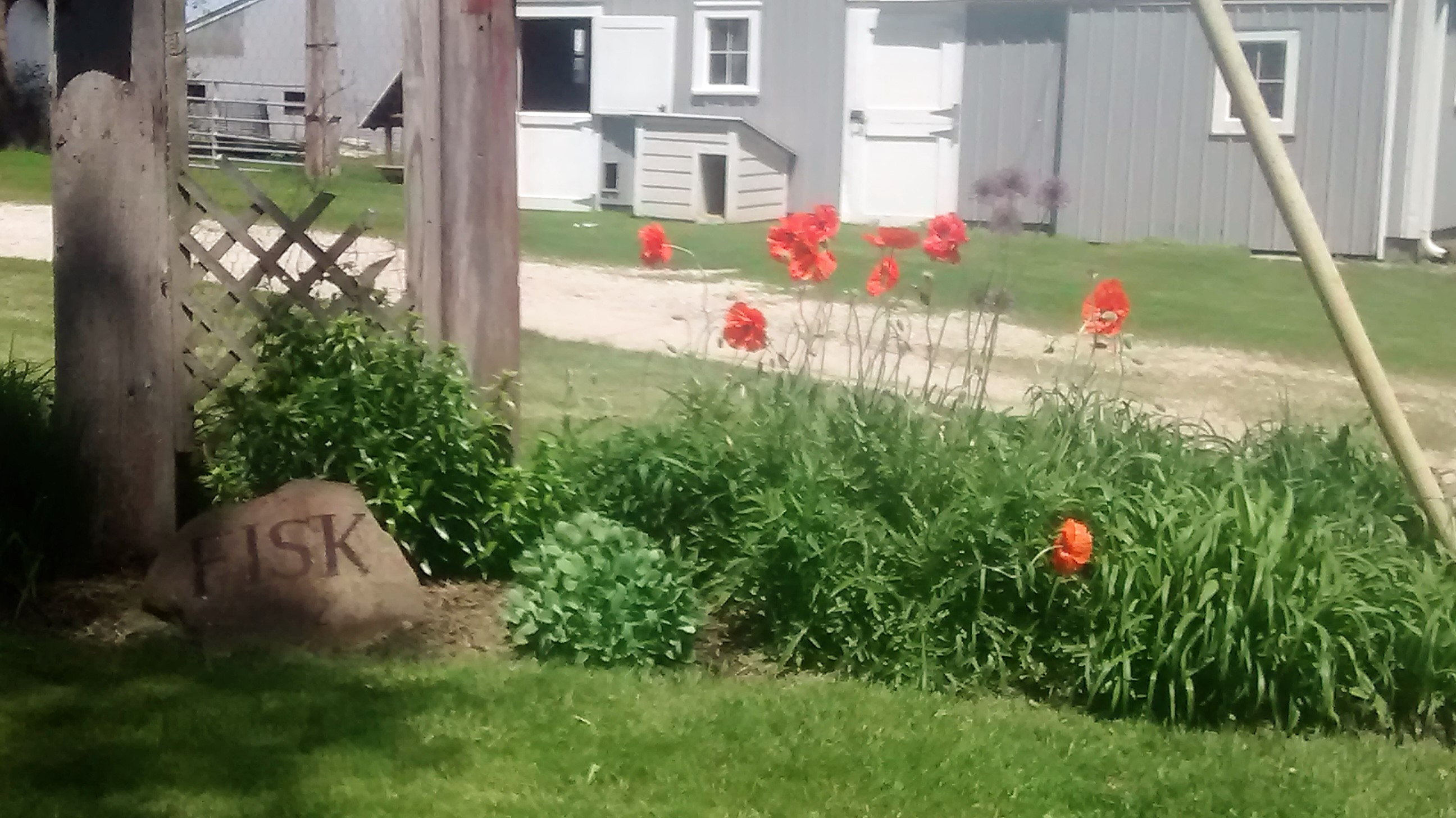 FISK-Barn-and-Poppies.jpg
