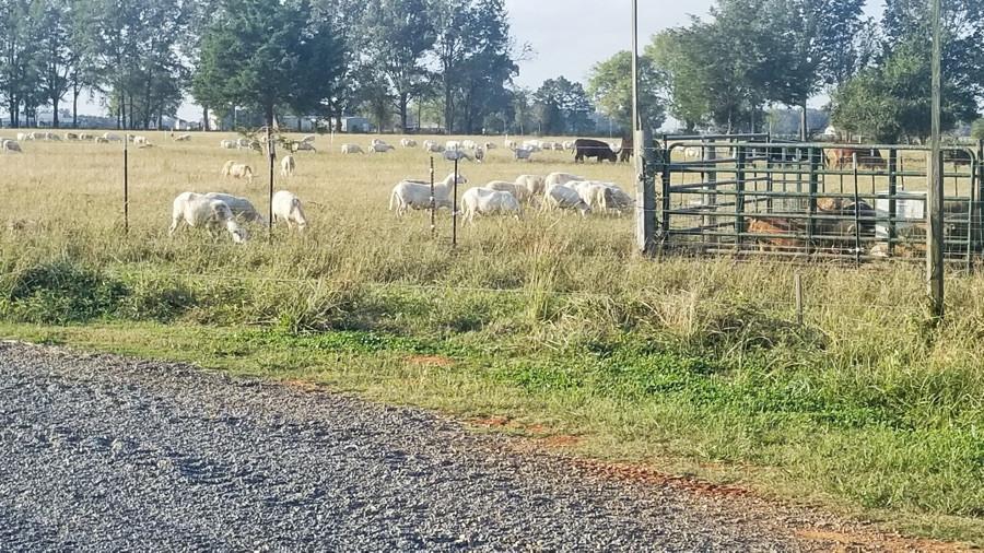 sheep-pasture.jpg