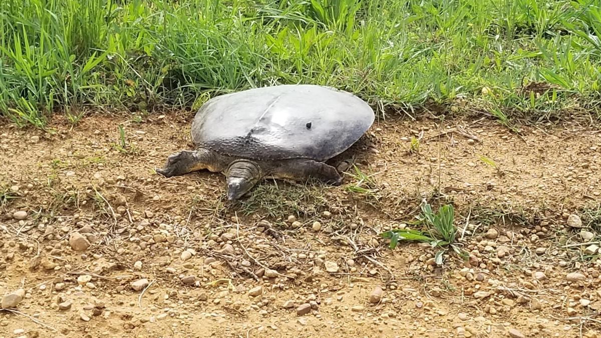 huge-turtle.jpeg