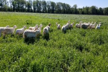 Quarter Lamb Bundle