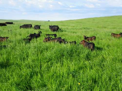 Calving in Sync with Nature