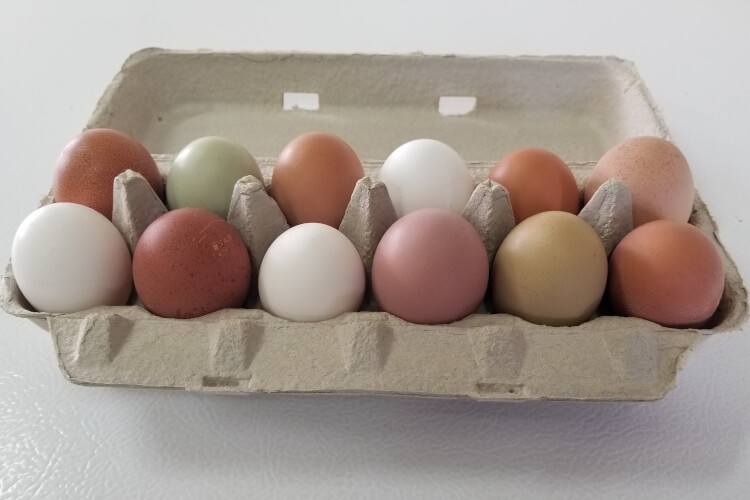 Delicious, Nutritious, Beautiful Eggs