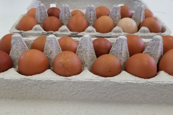 Chicken Eggs (Medium)