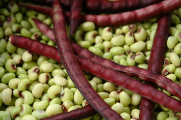 Pinkeye Purple Hull Peas (unshelled bushel)