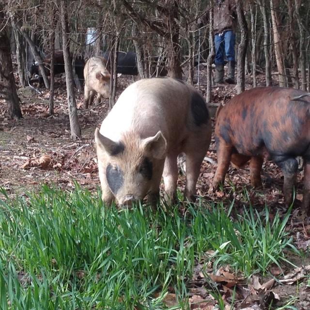 Forest Raised Pork