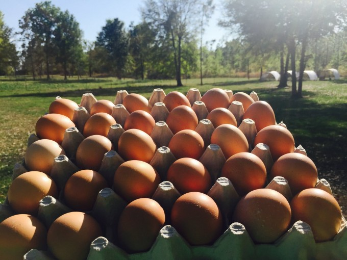 Eggs - 2  Flats for $20