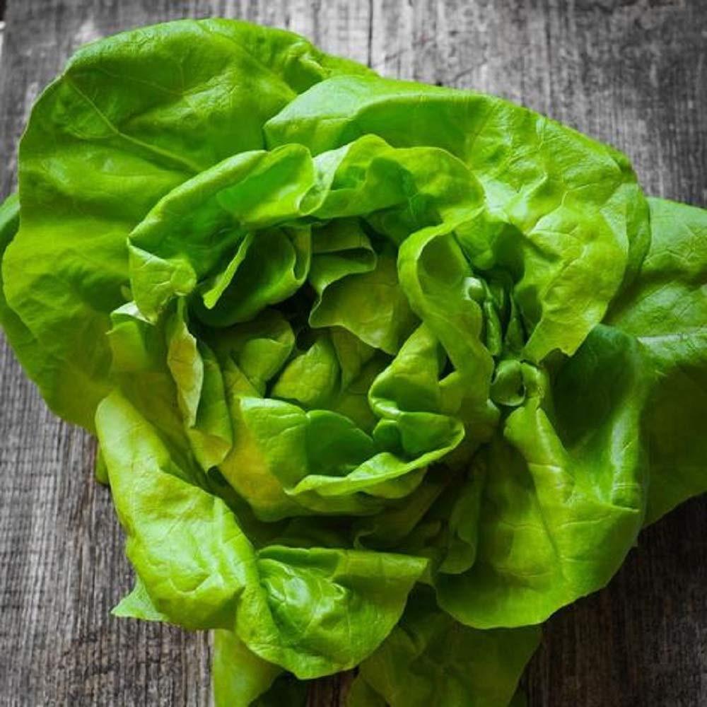 Little River: Organic Green Bibb Lettuce