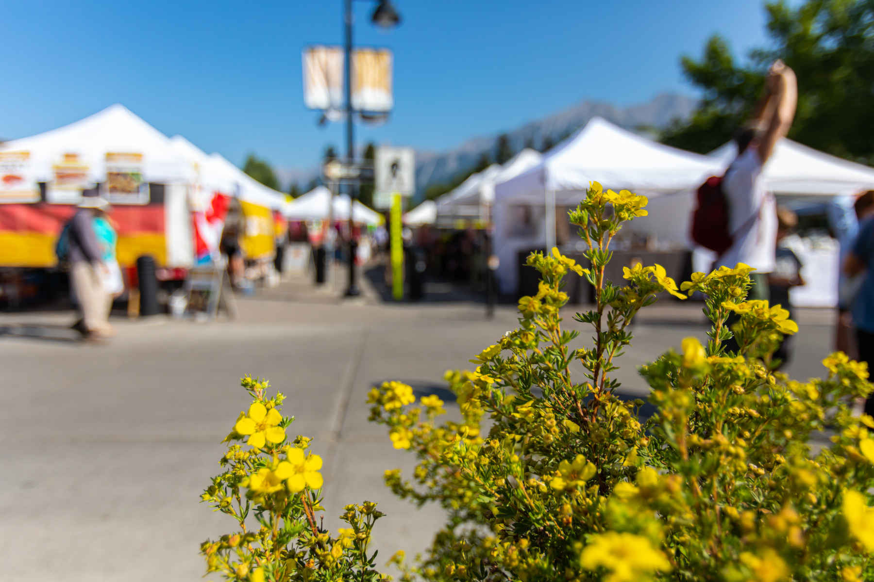 Hey, sunshine! Summer farmers' markets are starting