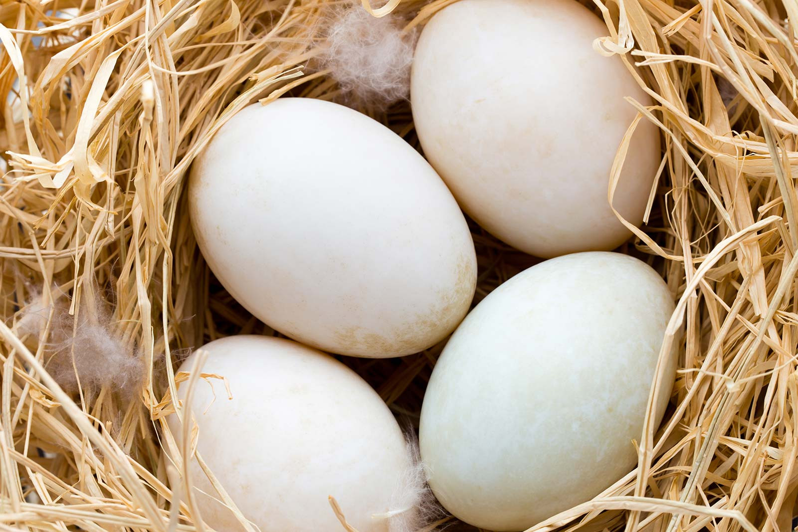 What's not to love about pastured duck eggs?