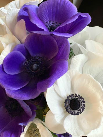 Anemone Mix - Bunch