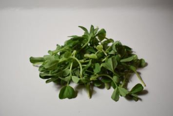 Little River: Organic Pea Shoots - 3oz