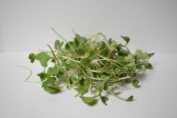 Little River:  Organic Micro Broccoli - 2oz