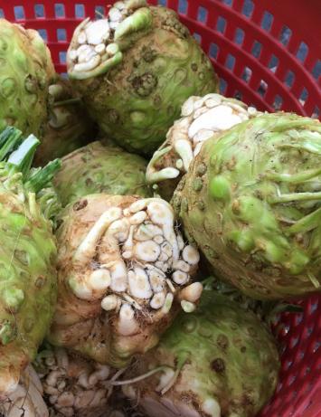 Organic Celery Root