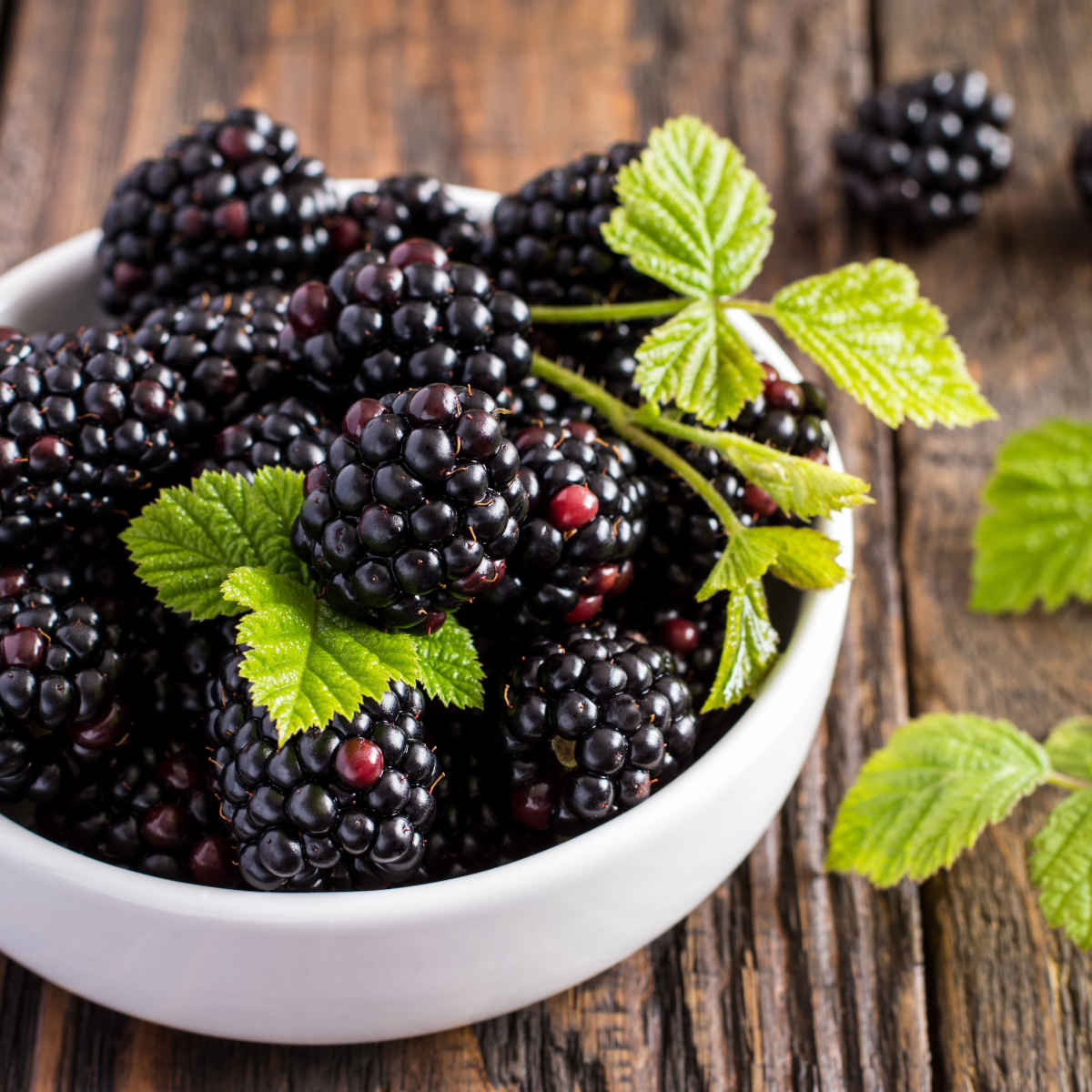 Native Blackberries