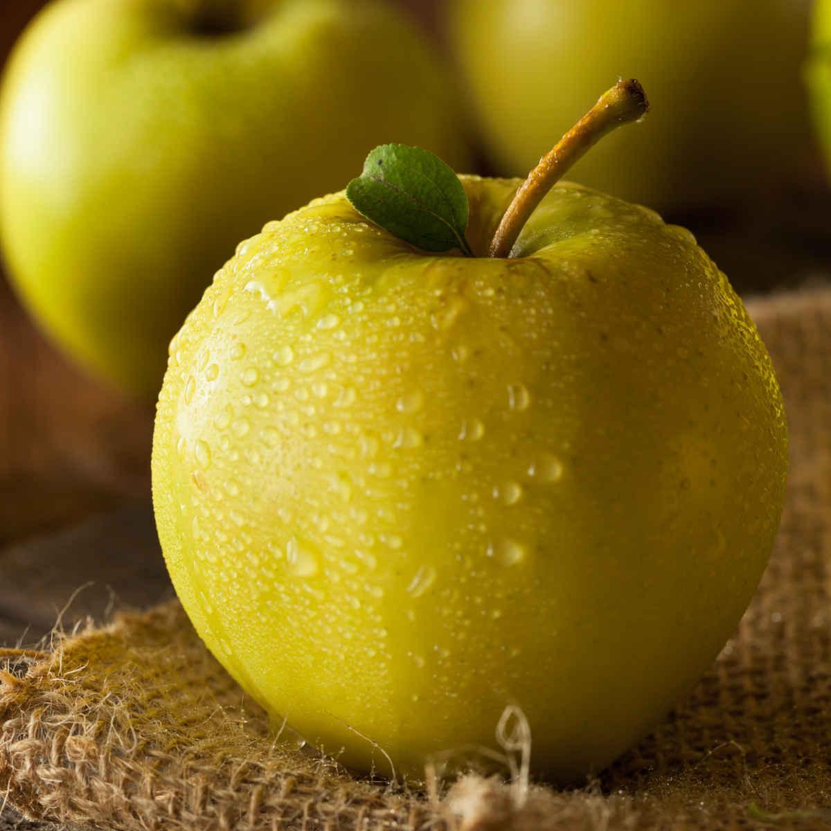 Apples, Ginger Gold