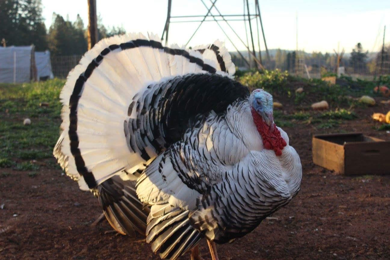 Heritage Turkey Deposit