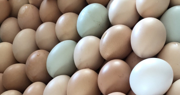 Dozen Pharis Eggs