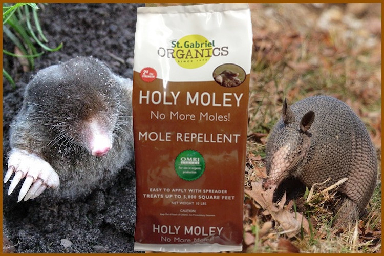 St. Gabriel Organics Holy Moley Mole Repellent