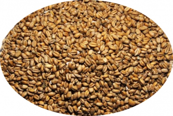 New Country Organics Wheat, Unmilled